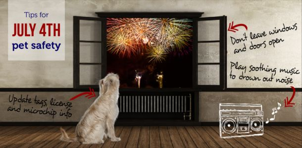 Seattle Animal Shelter offers tips to owners to protect pets on the Fourth of July