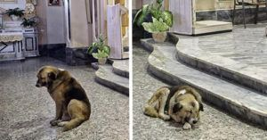 Dog Is Welcomed At Church Where His Human Companion Was Memorialized