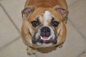 The Top 7 Questions Around Doggy Dental Health - ANSWERED