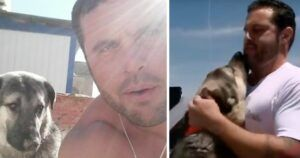 Soldier Finally Reunites With Stray Pup He Rescued In Iraq