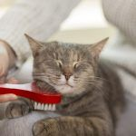 Cats Shed More Than Dogs. The Coronavirus, Not Fur