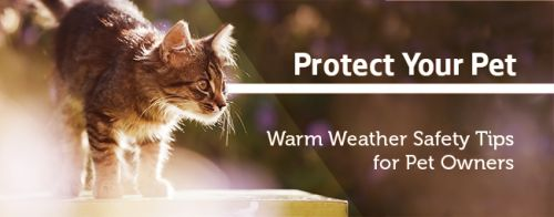 Temperatures are up! Seattle Animal Shelter reminds you to protect your pets
