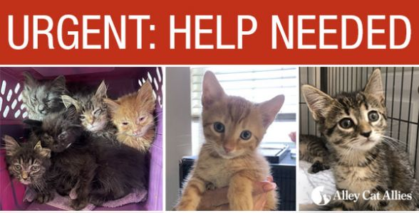 URGENT Need: Foster or Adoptive Homes for Cats and Kittens