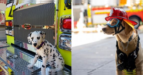16 Dogs That Will Warm Your Heart One Fire At A Time