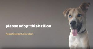Foster Mom Creates Hilarious, F-Bomb-Packed Adoption Advertisement For 'Hellion' Dog Named Hank