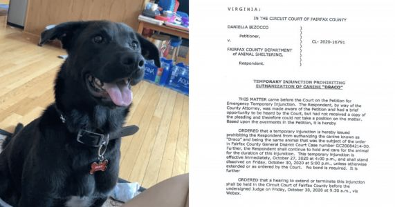"""UPDATE: """"Dangerous"""" Dog At Risk Of Euthanasia Sees A Glimmer Of Hope"""