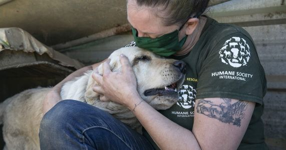 """196 Dogs Saved From Meat Farm That """"Smelled Like Death"""""""