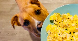 5 Low-Cost Ways To Boost Your Dog's Existing Food