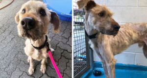 'Skeleton' Dog Found Locked Inside Cage At Abandoned Doggy Daycare Is So Glad To Be Safe