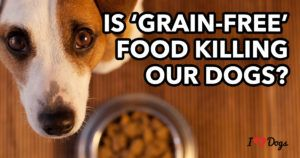 Is Grain-Free Food Killing Dogs? 7 Things You Need to Know About the FDA's Announcement