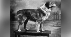 Humanity's Best Friends: 10 Important Dogs Throughout History You Should Know About