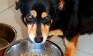 8 Reasons Your Dog May Not Be Eating