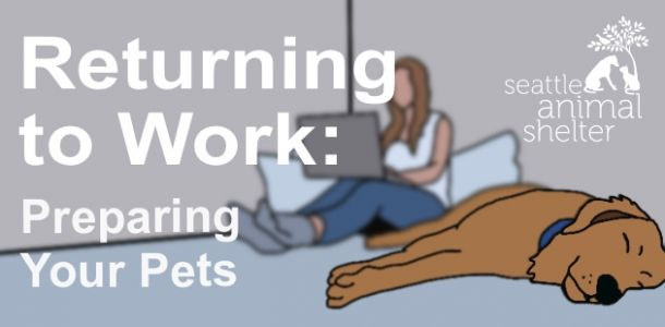 Returning to Work: Preparing Your Pets