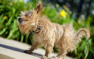 The Reason Why Your Dog Shakes Off