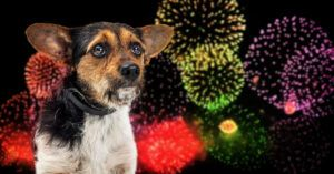 Low-Noise Fireworks Exist, So Why Won't We Use Them?