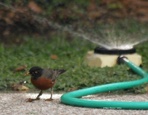 The Drought's Effect on Avian Survival