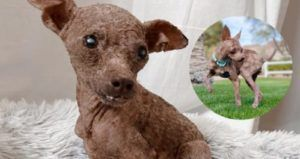 Hairless Rescue Dog's Transformation Will Make You Do A Double-Take
