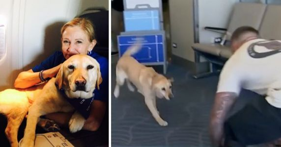 Flight Attendant Helps Reunite Veterans With Their Retired Service Dogs