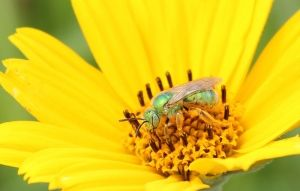 Thank Our Pollinators!