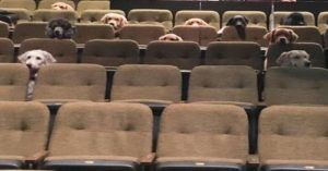 Canadian Service Dogs Made The Best Theater Audience Ever