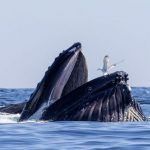 Protecting Whales through Research and Public Policy