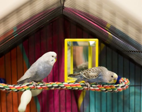 """""""JERRY"""" and """"STANLEY"""" budgie Buds"""