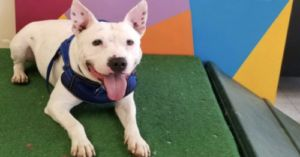 Patriot The Deaf Dog Is Learning Sign Language To Help Him Find A Forever Home