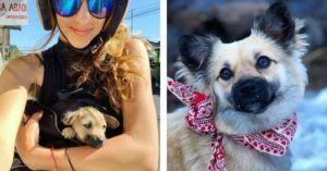 From Stray Bali Puppy To Colorado Mountain Dog