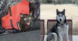 Dog Saves Cat From Roasting Alive Inside Plastic Bag As Temps Rise To Triple Digits