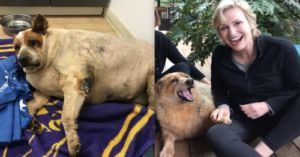 Jane Lynch's Obese Rescue Dog Makes Incredible Recovery