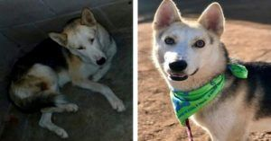 "Blind, Anxious Dog Loses 20 Pounds In A Mexican Shelter Before Getting His ""Second Chance"""