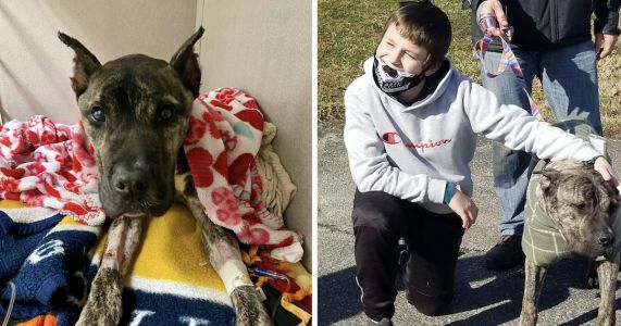 UPDATE: Malnourished Dog Doubles His Weight And Reunites With His 11-Year-Old Rescuer